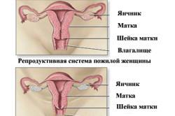 Репродуктивные органы молодой и пожилой женщины