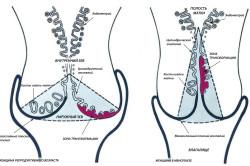Схема строения шейки матки